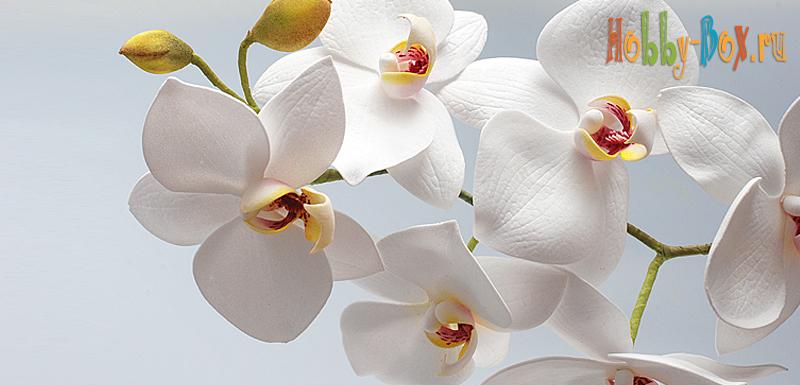 Мастер-класс: Орхидея из фоамирана